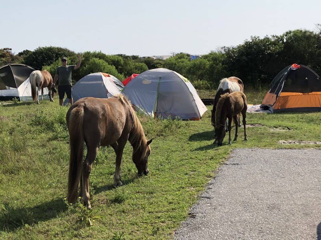 Campground Review – Assateague Island State Park